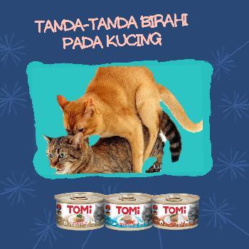 Cat Kucing Mengenal Tanda Tanda Kucing Birahi Raja Petshop